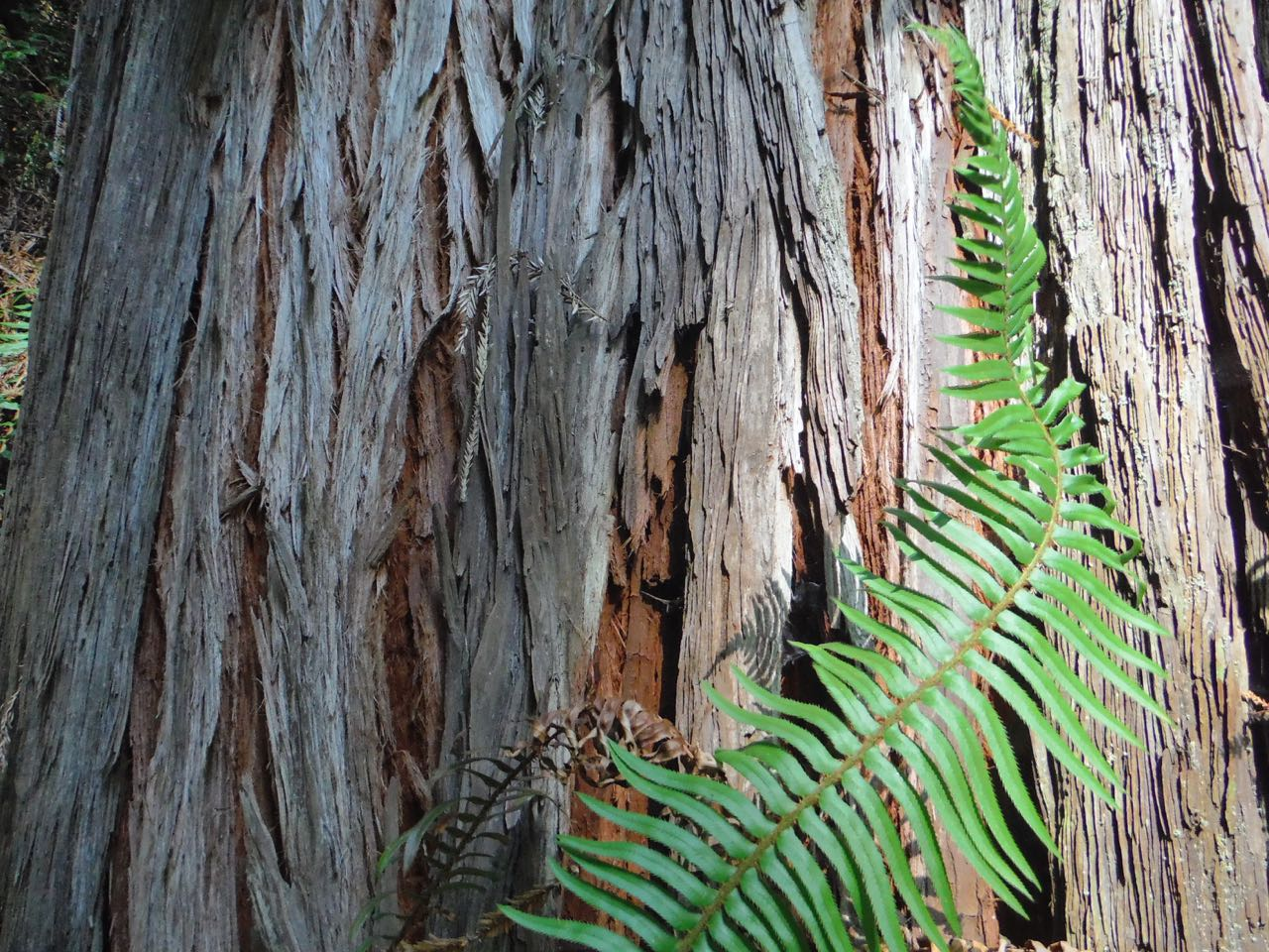 Redwoods 2017 10 01 207 Of 244