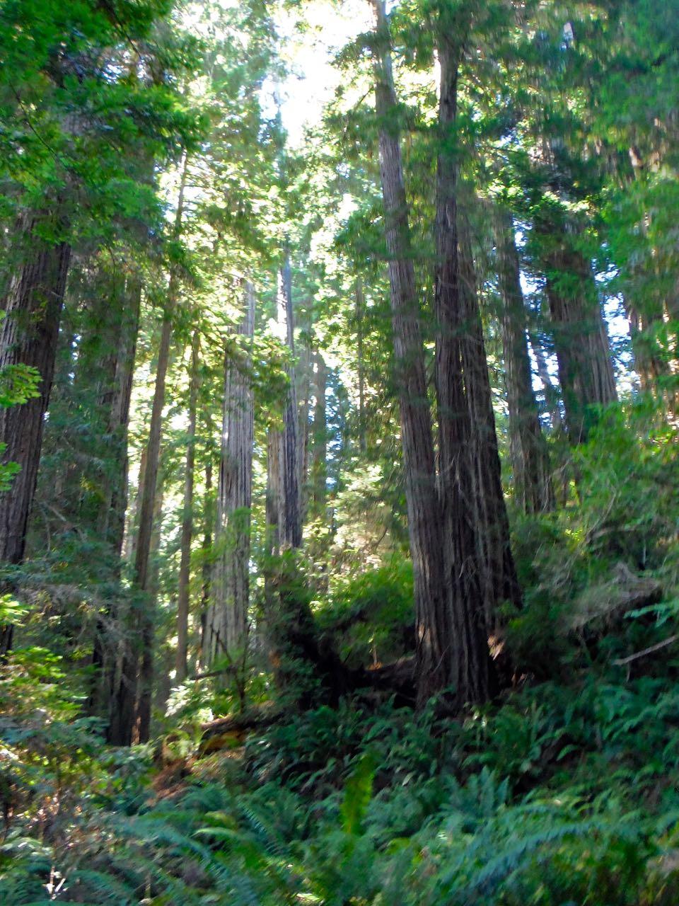 Redwoods 2017 10 01 208 Of 244