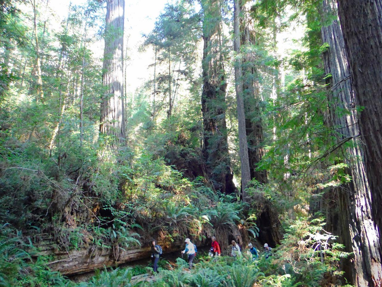 Redwoods 2017 10 01 209 Of 244