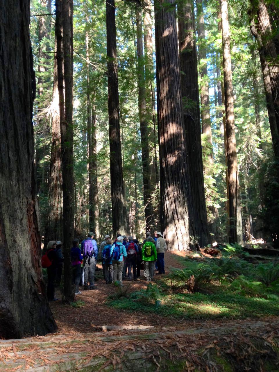 Redwoods 2017 10 01 21 Of 244