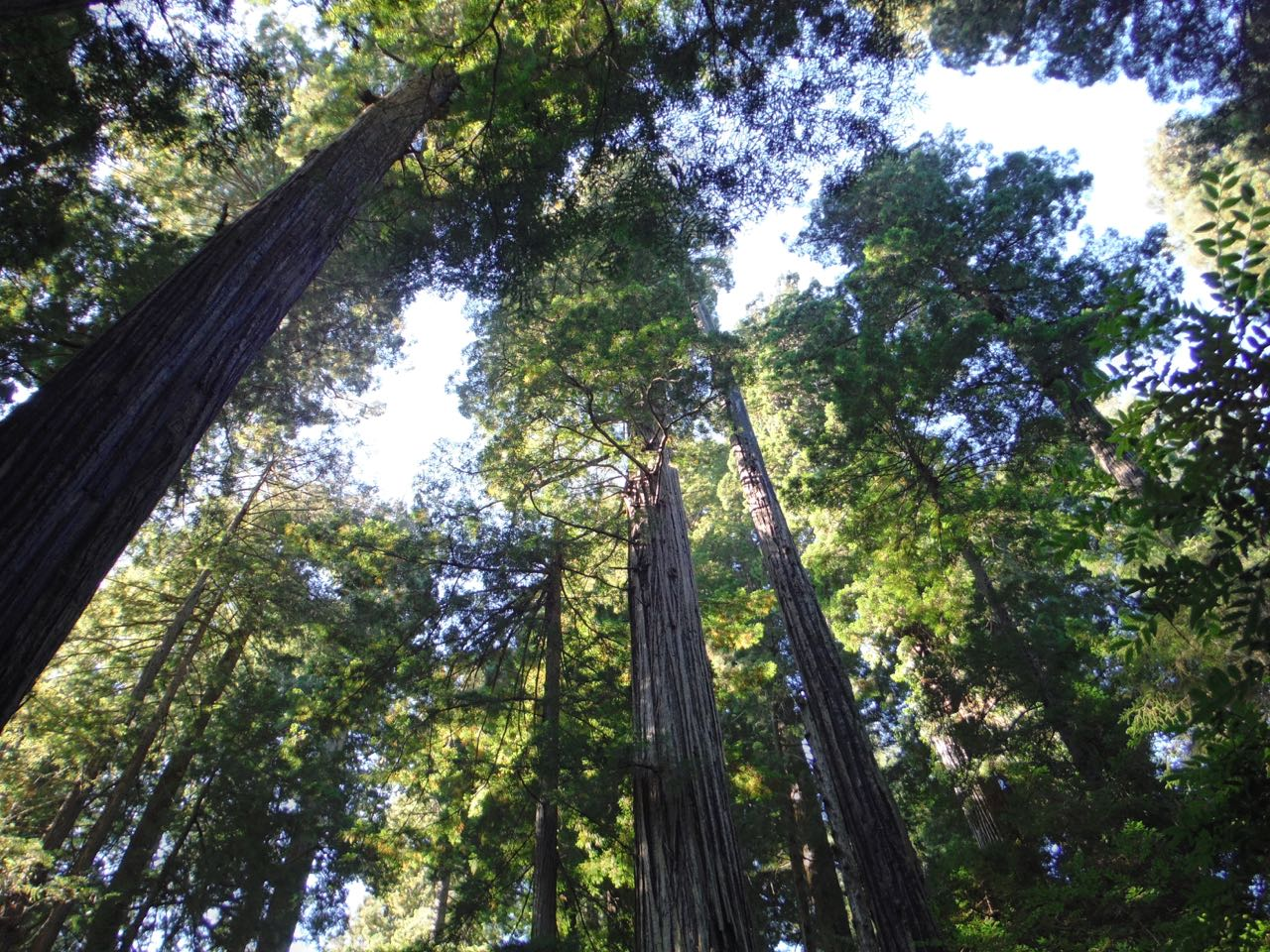 Redwoods 2017 10 01 210 Of 244