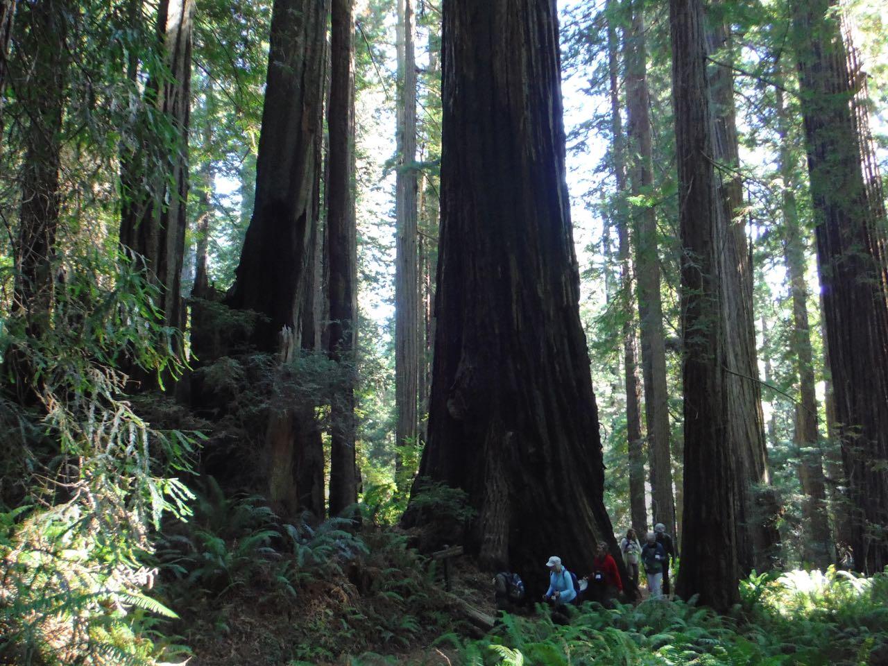 Redwoods 2017 10 01 211 Of 244