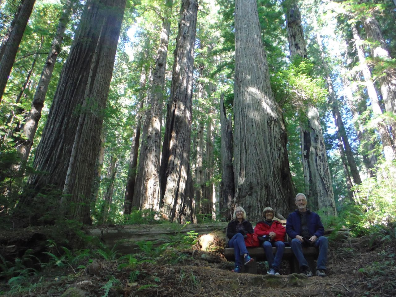 Redwoods 2017 10 01 212 Of 244