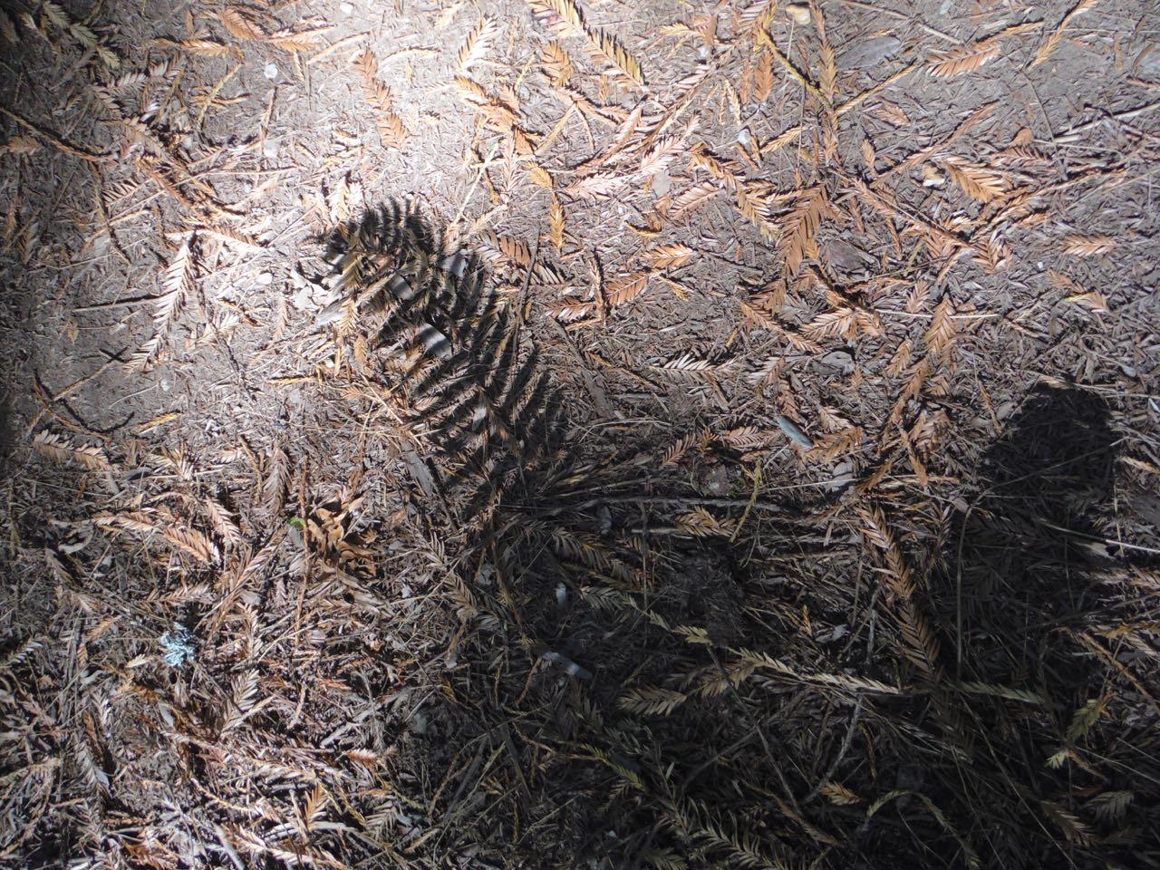 Redwoods 2017 10 01 213 Of 244