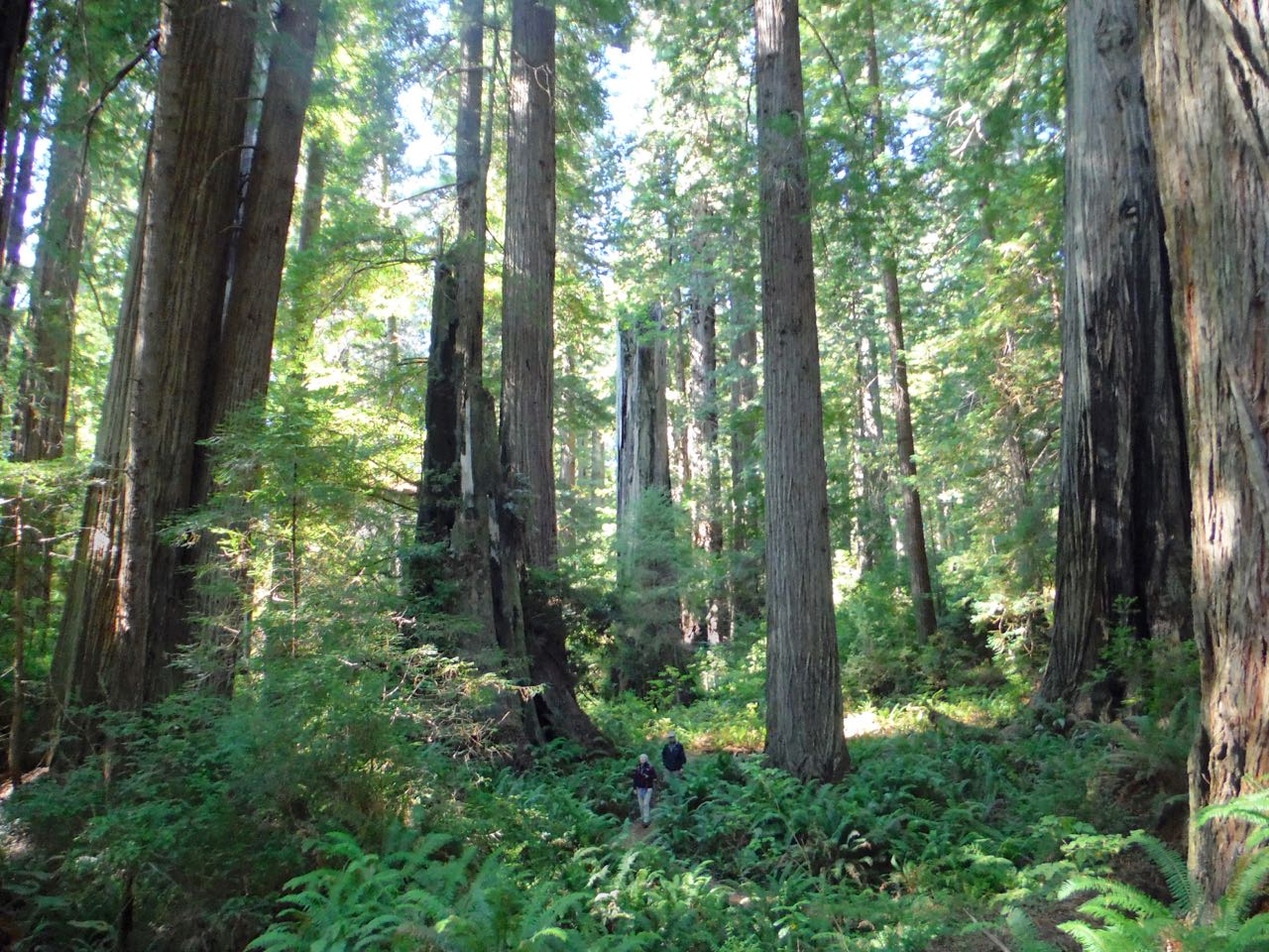 Redwoods 2017 10 01 214 Of 244