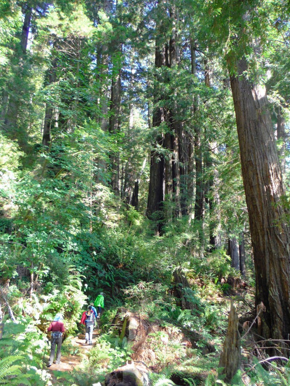 Redwoods 2017 10 01 215 Of 244