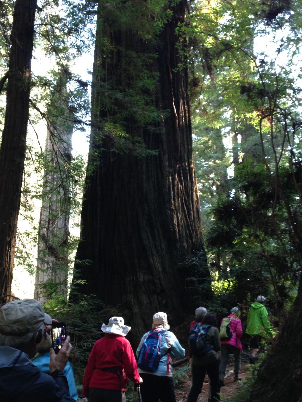 Redwoods 2017 10 01 217 Of 244
