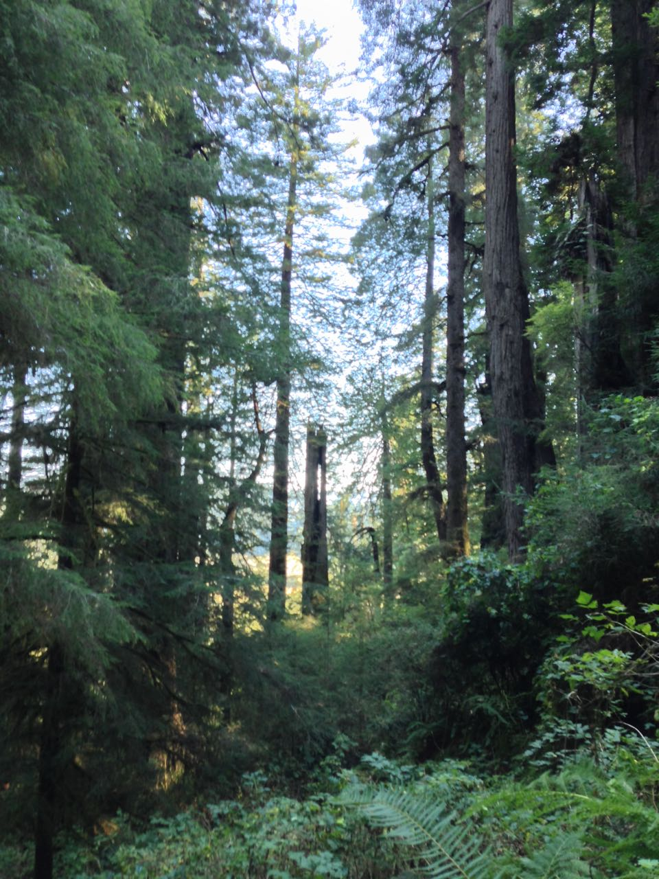 Redwoods 2017 10 01 218 Of 244