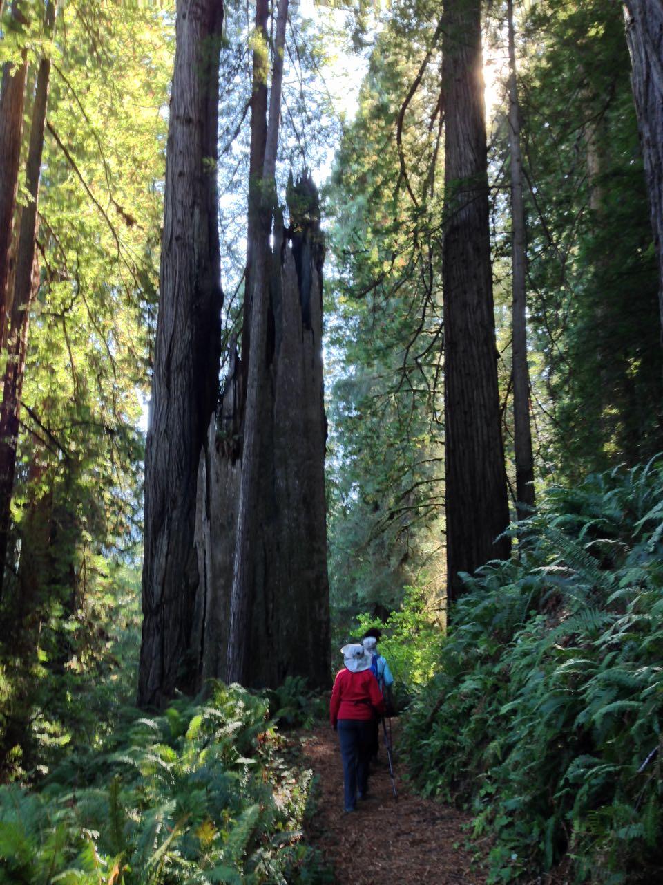 Redwoods 2017 10 01 219 Of 244