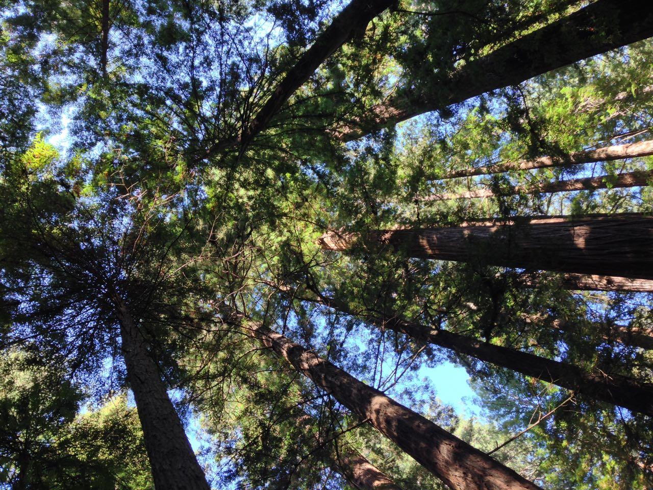 Redwoods 2017 10 01 22 Of 244