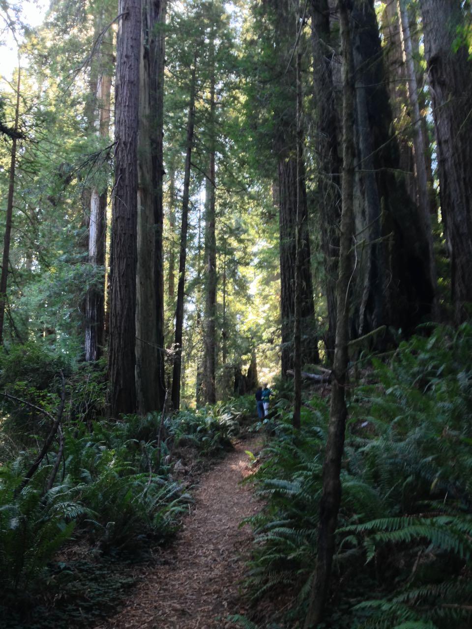 Redwoods 2017 10 01 220 Of 244