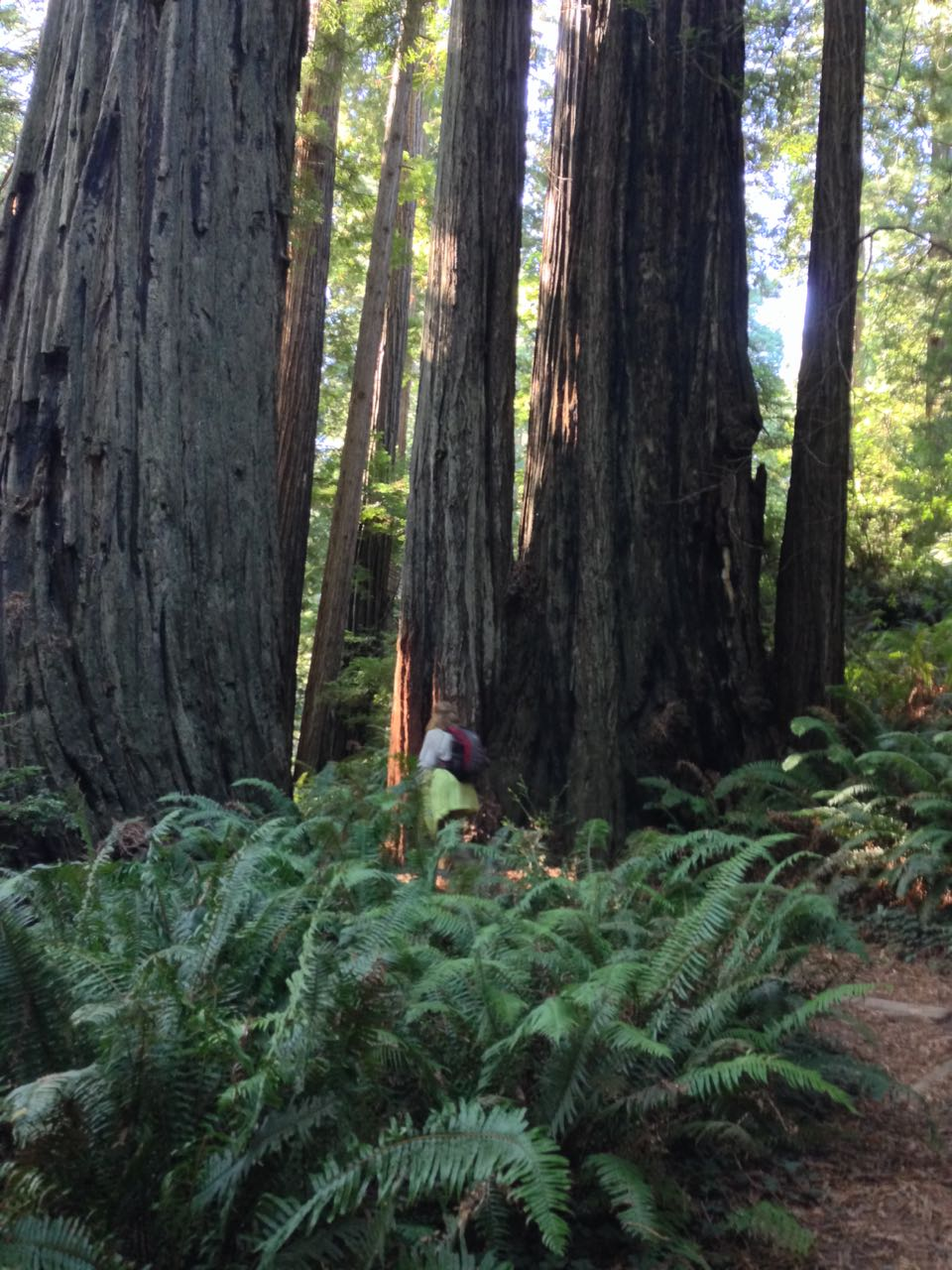 Redwoods 2017 10 01 221 Of 244