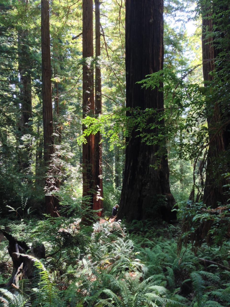 Redwoods 2017 10 01 222 Of 244