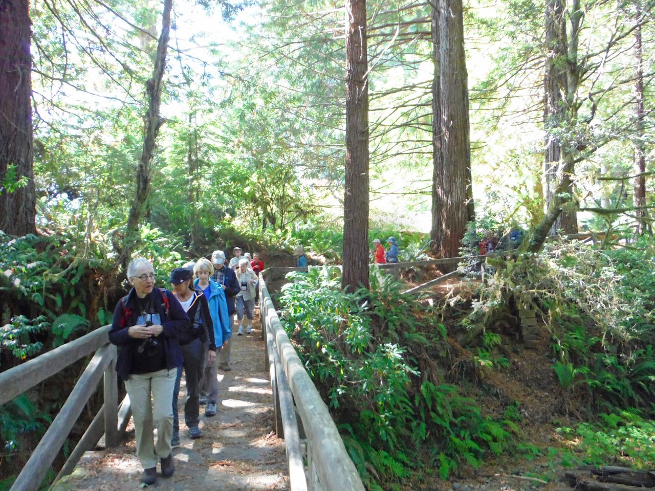 Redwoods 2017 10 01 226 Of 244