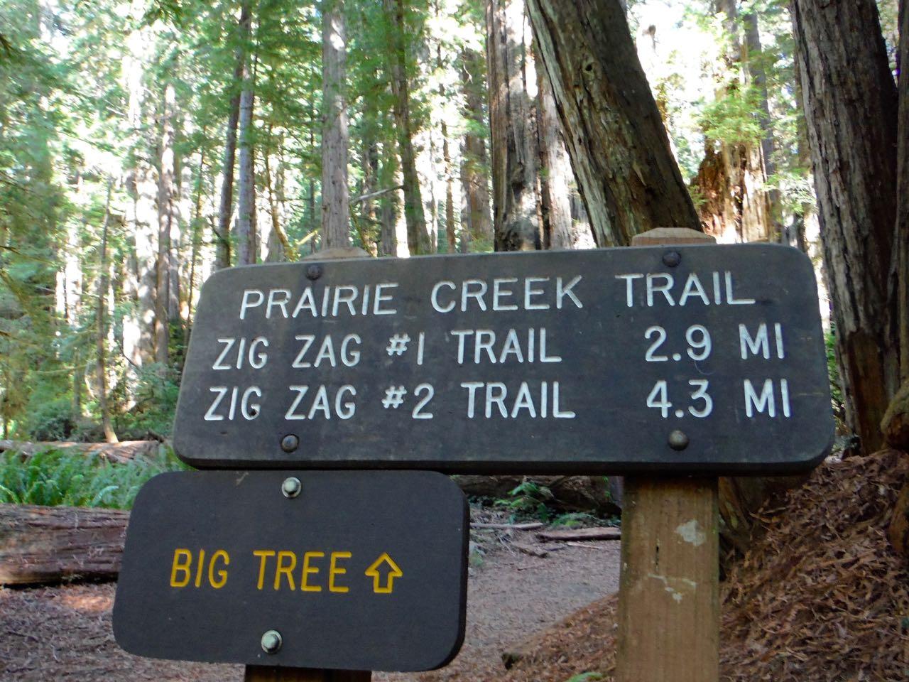 Redwoods 2017 10 01 227 Of 244