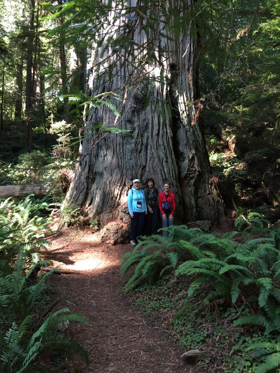 Redwoods 2017 10 01 229 Of 244