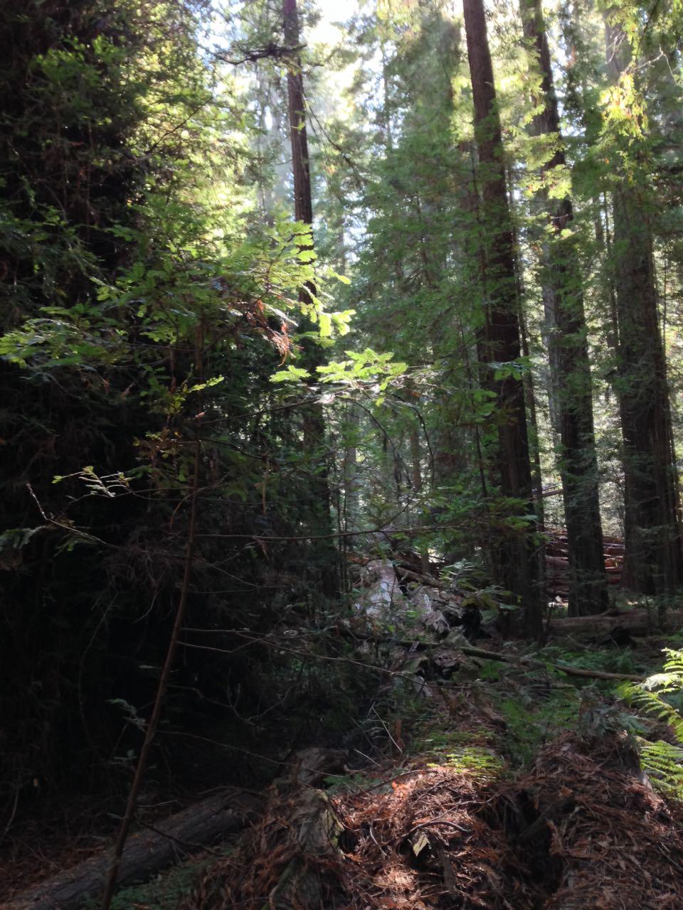 Redwoods 2017 10 01 23 Of 244