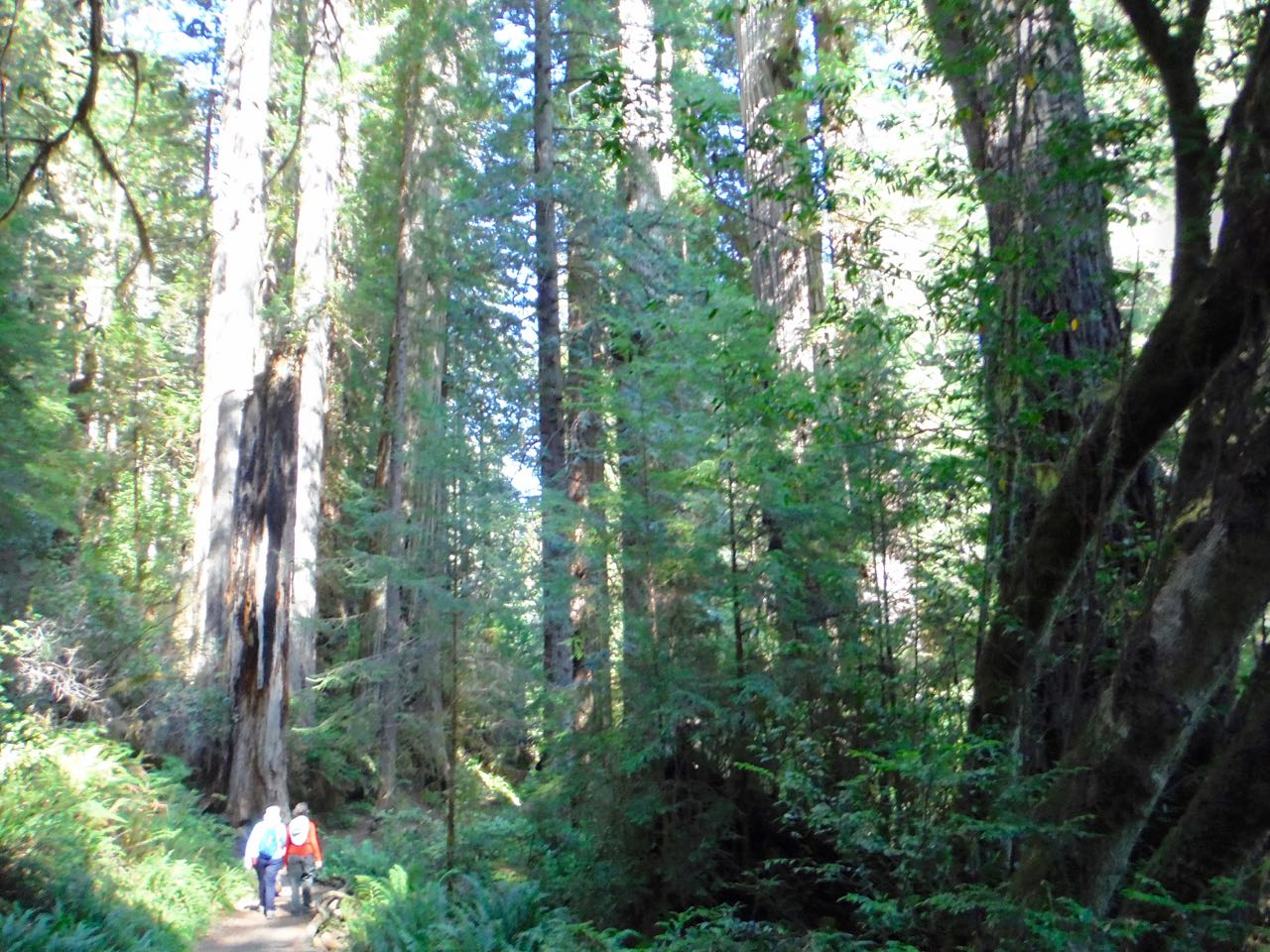 Redwoods 2017 10 01 230 Of 244