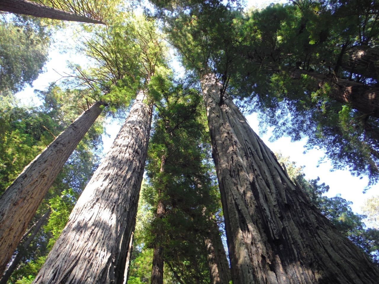 Redwoods 2017 10 01 231 Of 244