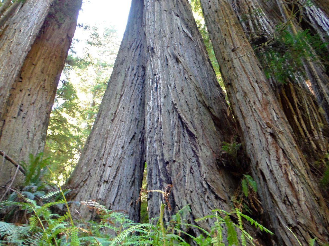 Redwoods 2017 10 01 232 Of 244