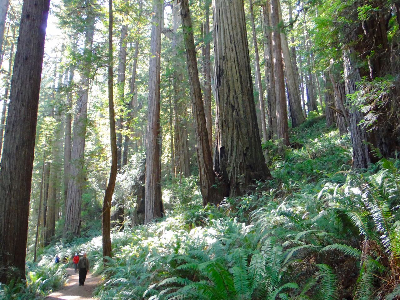Redwoods 2017 10 01 236 Of 244