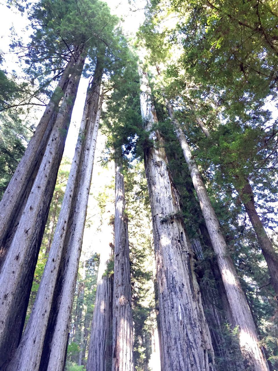 Redwoods 2017 10 01 237 Of 244