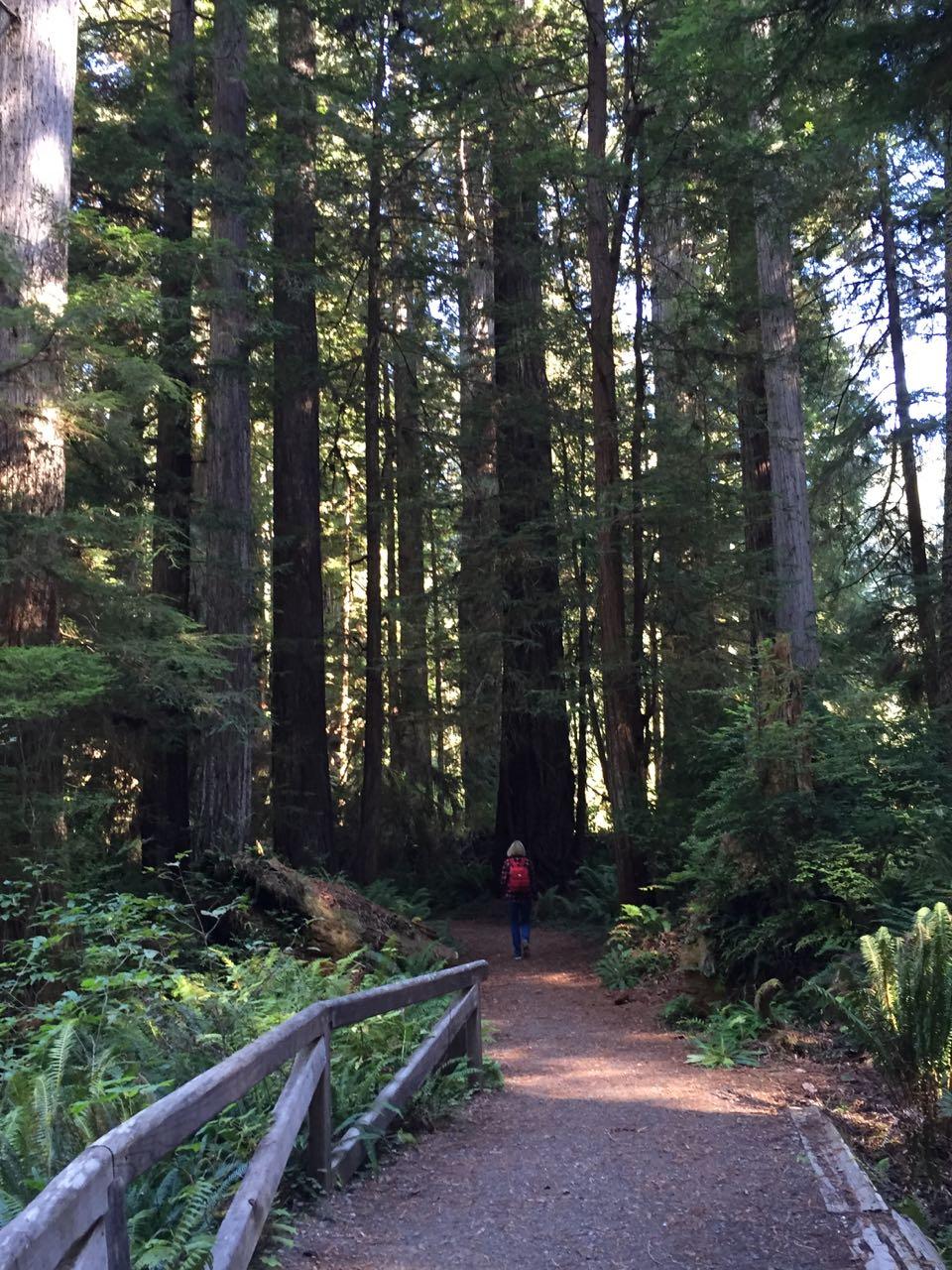 Redwoods 2017 10 01 238 Of 244