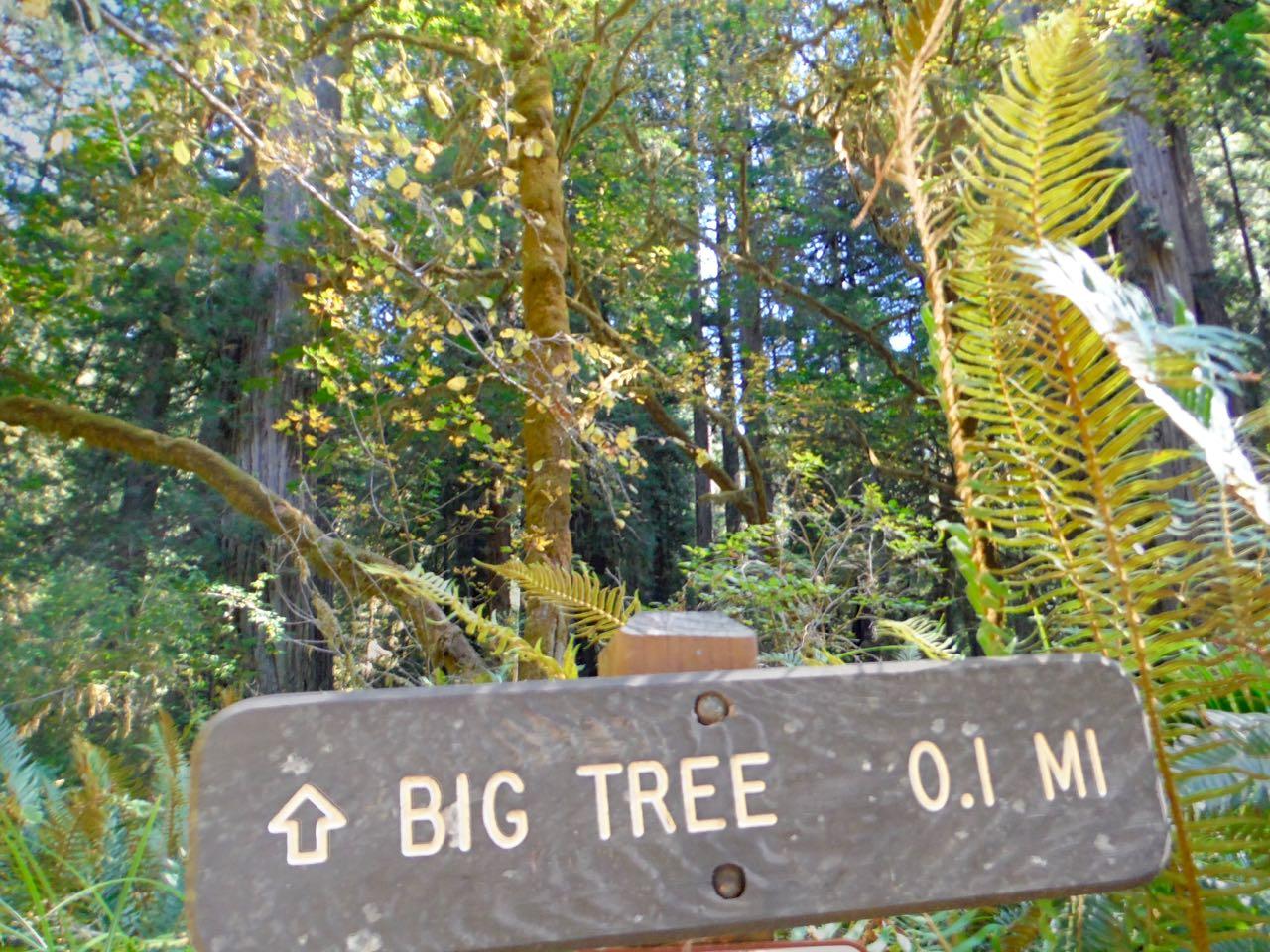 Redwoods 2017 10 01 239 Of 244