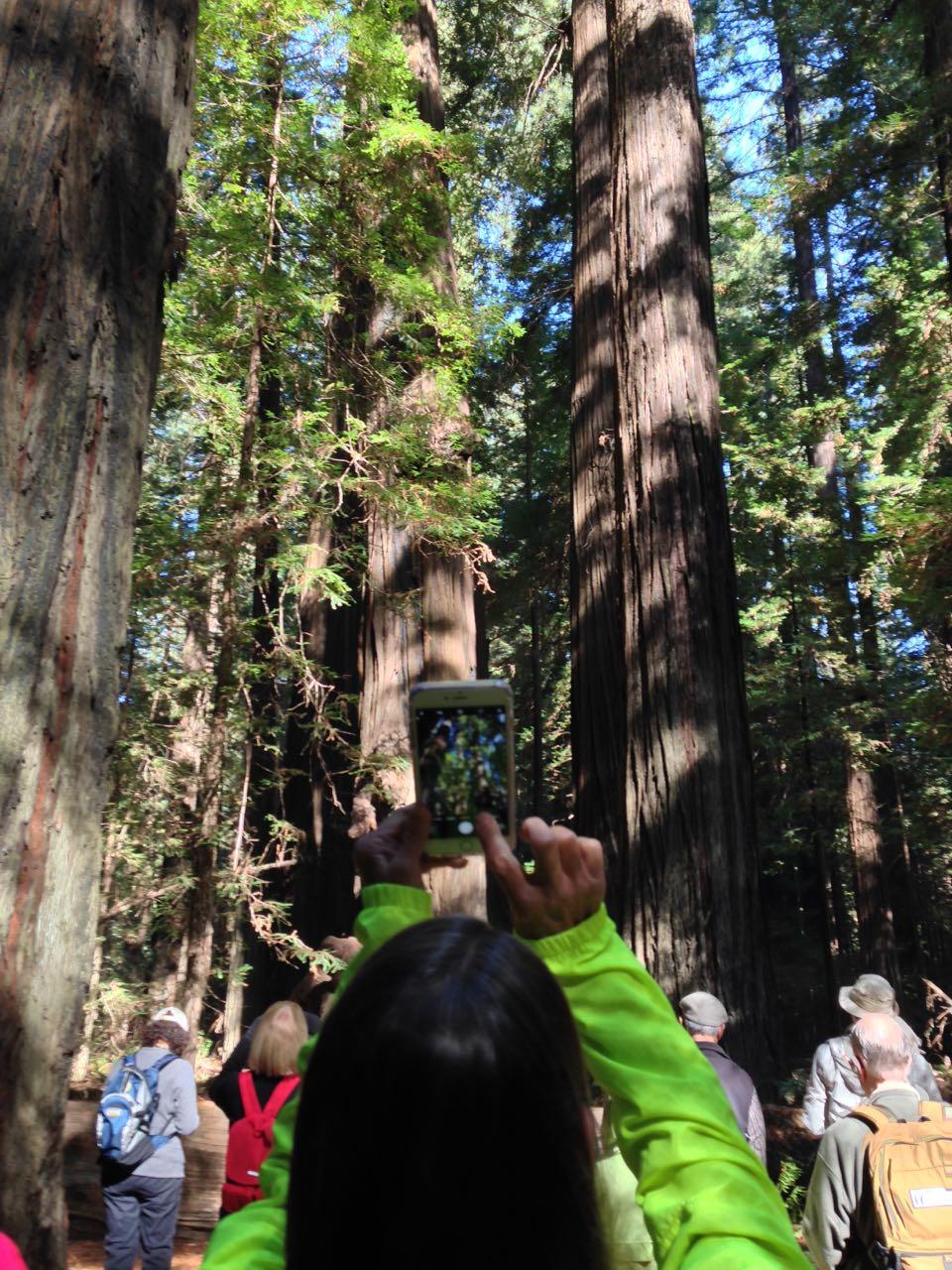 Redwoods 2017 10 01 24 Of 244