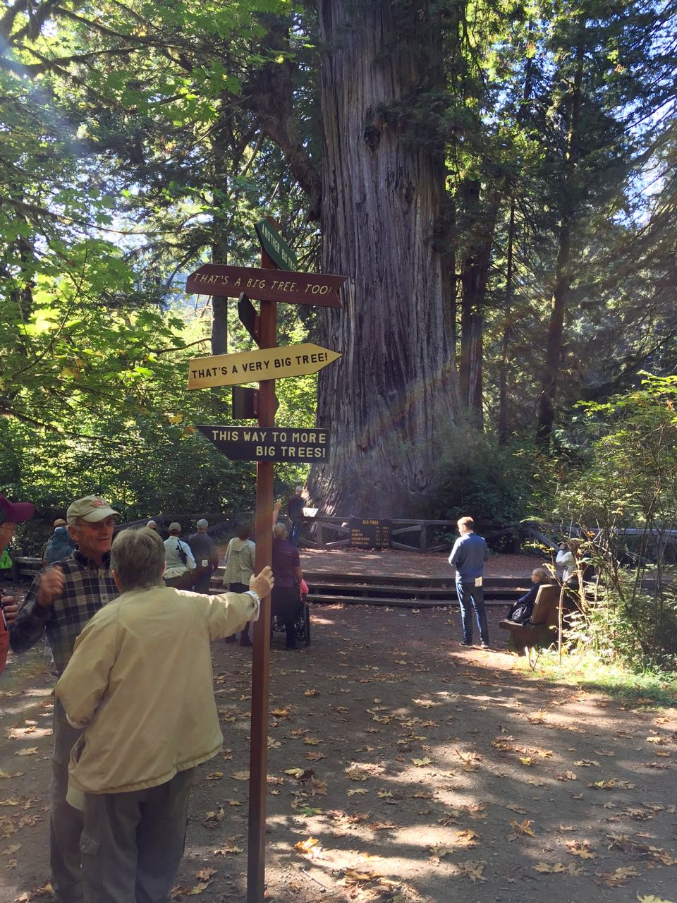 Redwoods 2017 10 01 240 Of 244