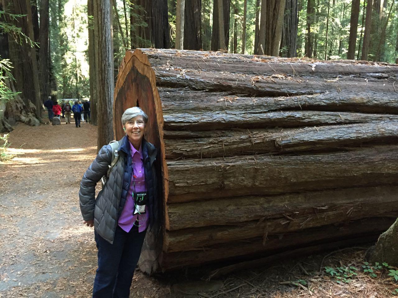 Redwoods 2017 10 01 243 Of 244
