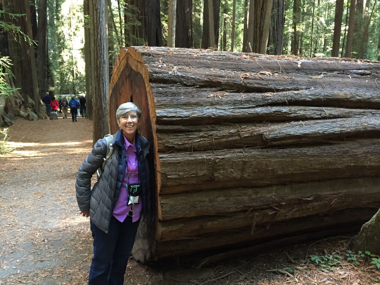 Redwoods 2017 10 01 243 Of 244