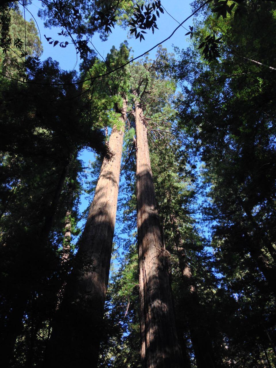 Redwoods 2017 10 01 25 Of 244