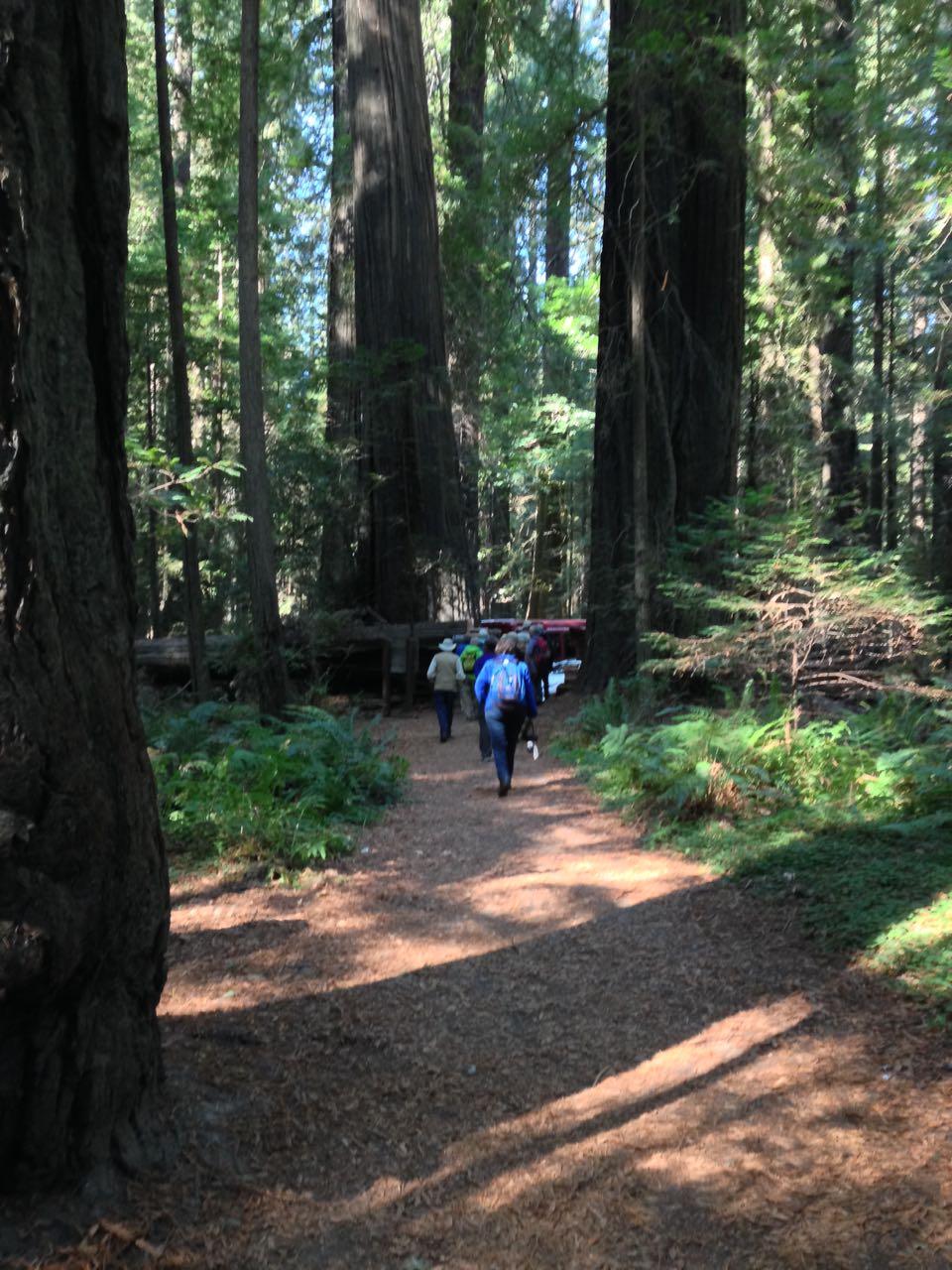 Redwoods 2017 10 01 26 Of 244