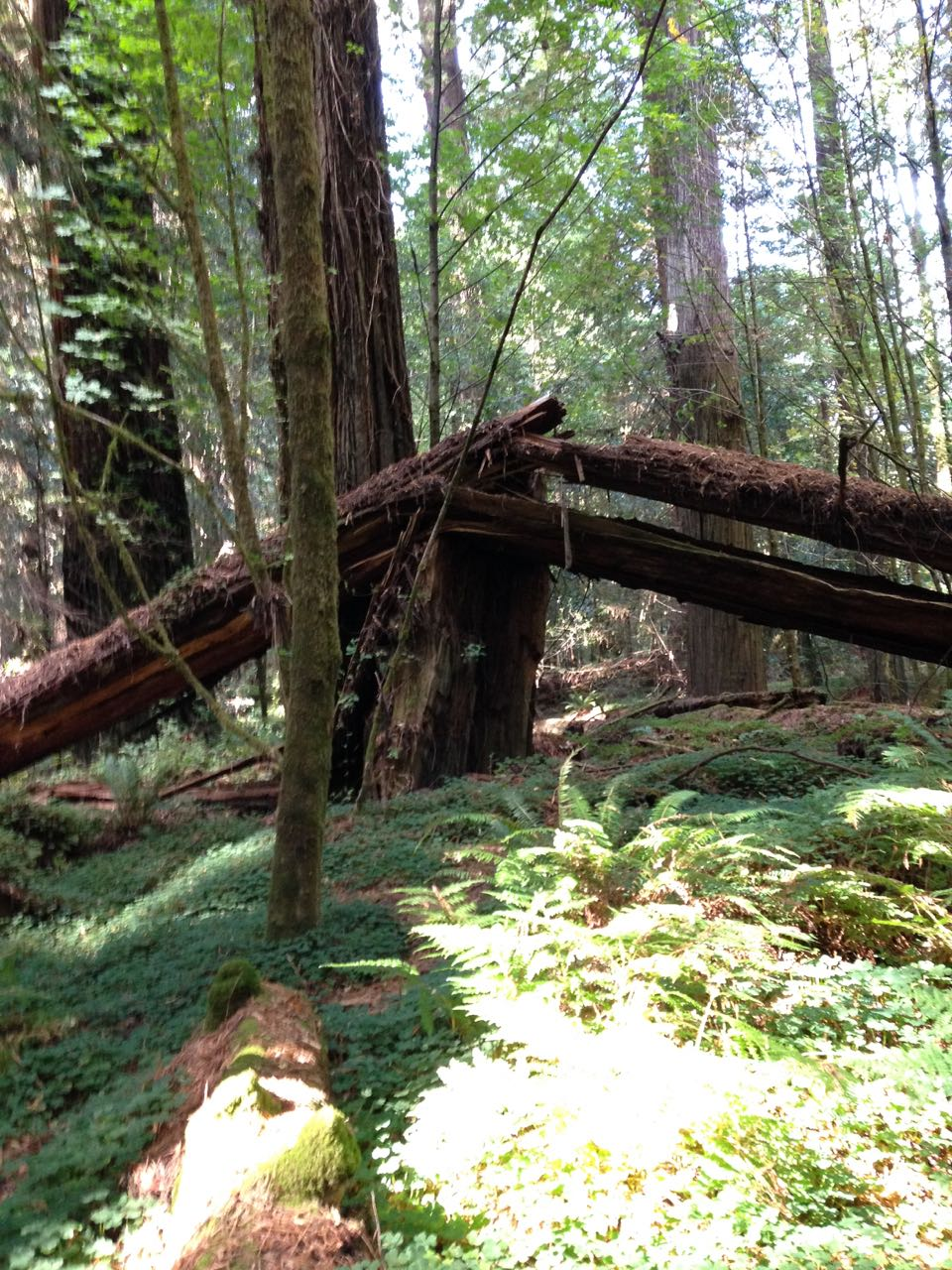 Redwoods 2017 10 01 33 Of 244