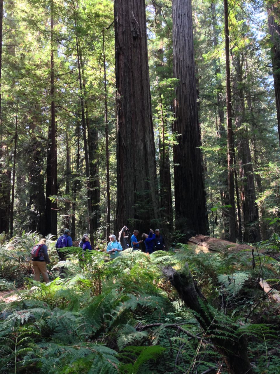 Redwoods 2017 10 01 34 Of 244