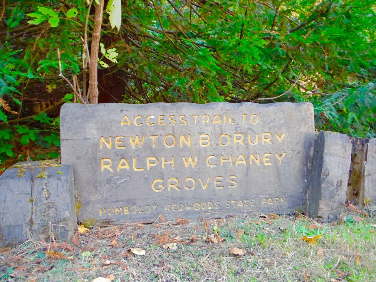 Redwoods 2017 10 01 37 Of 244