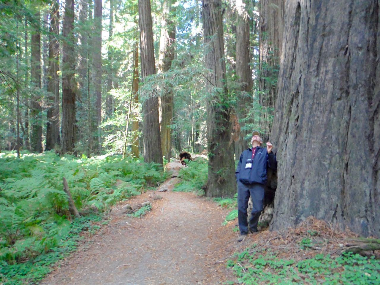 Redwoods 2017 10 01 39 Of 244