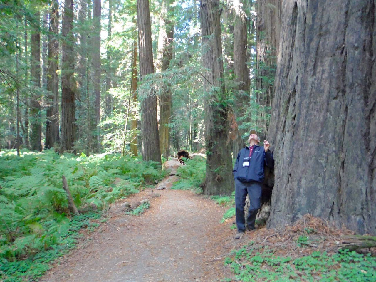 Redwoods 2017 10 01 39 Of 244