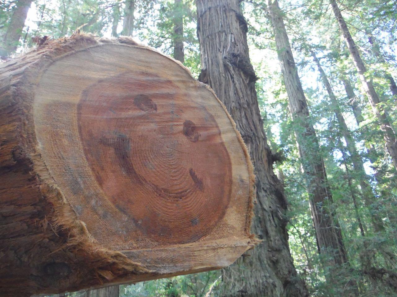 Redwoods 2017 10 01 40 Of 244