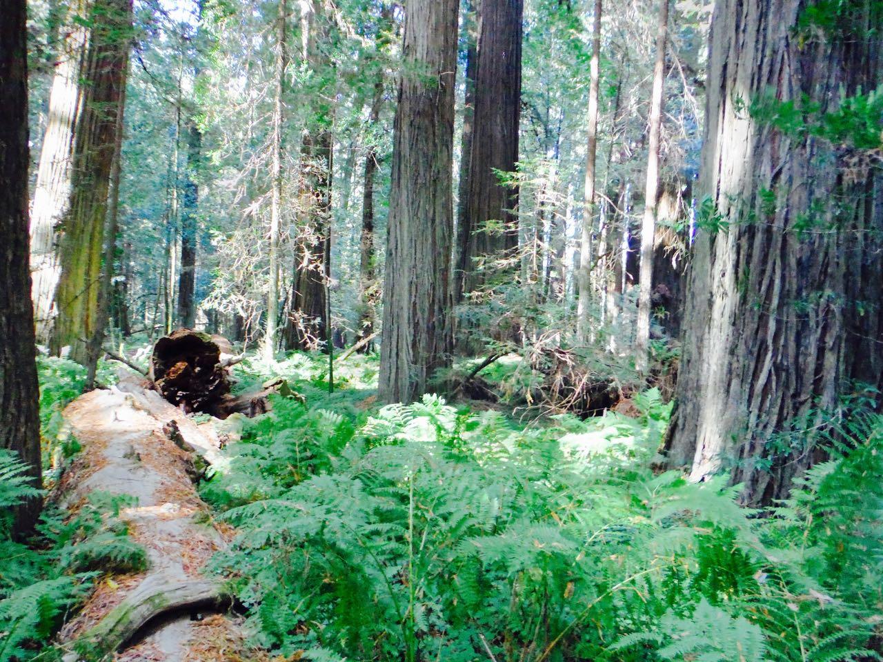 Redwoods 2017 10 01 42 Of 244