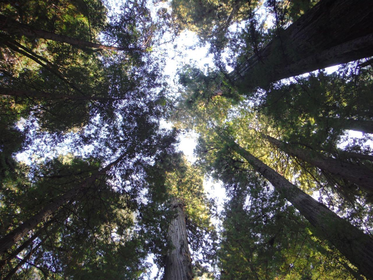Redwoods 2017 10 01 43 Of 244