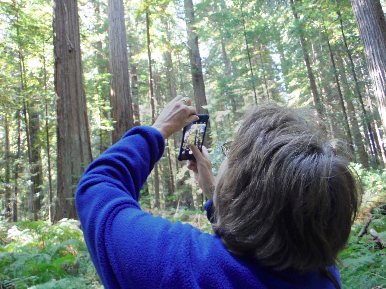 Redwoods 2017 10 01 44 Of 244