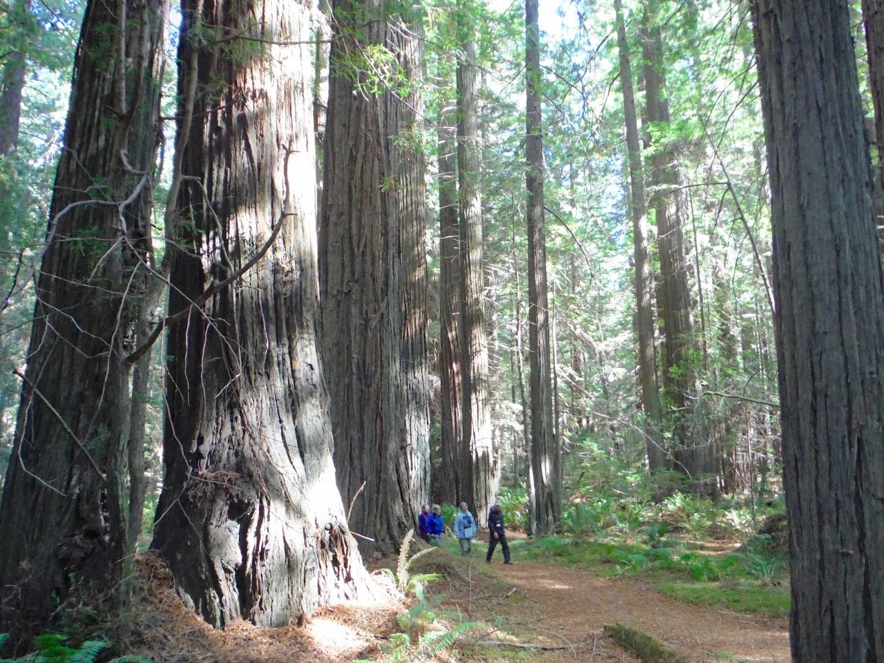 Redwoods 2017 10 01 45 Of 244