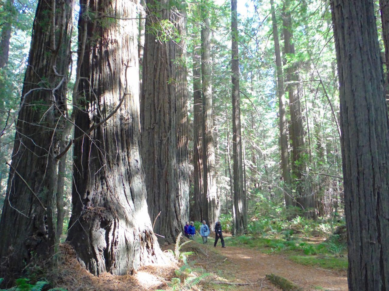Redwoods 2017 10 01 45 Of 244