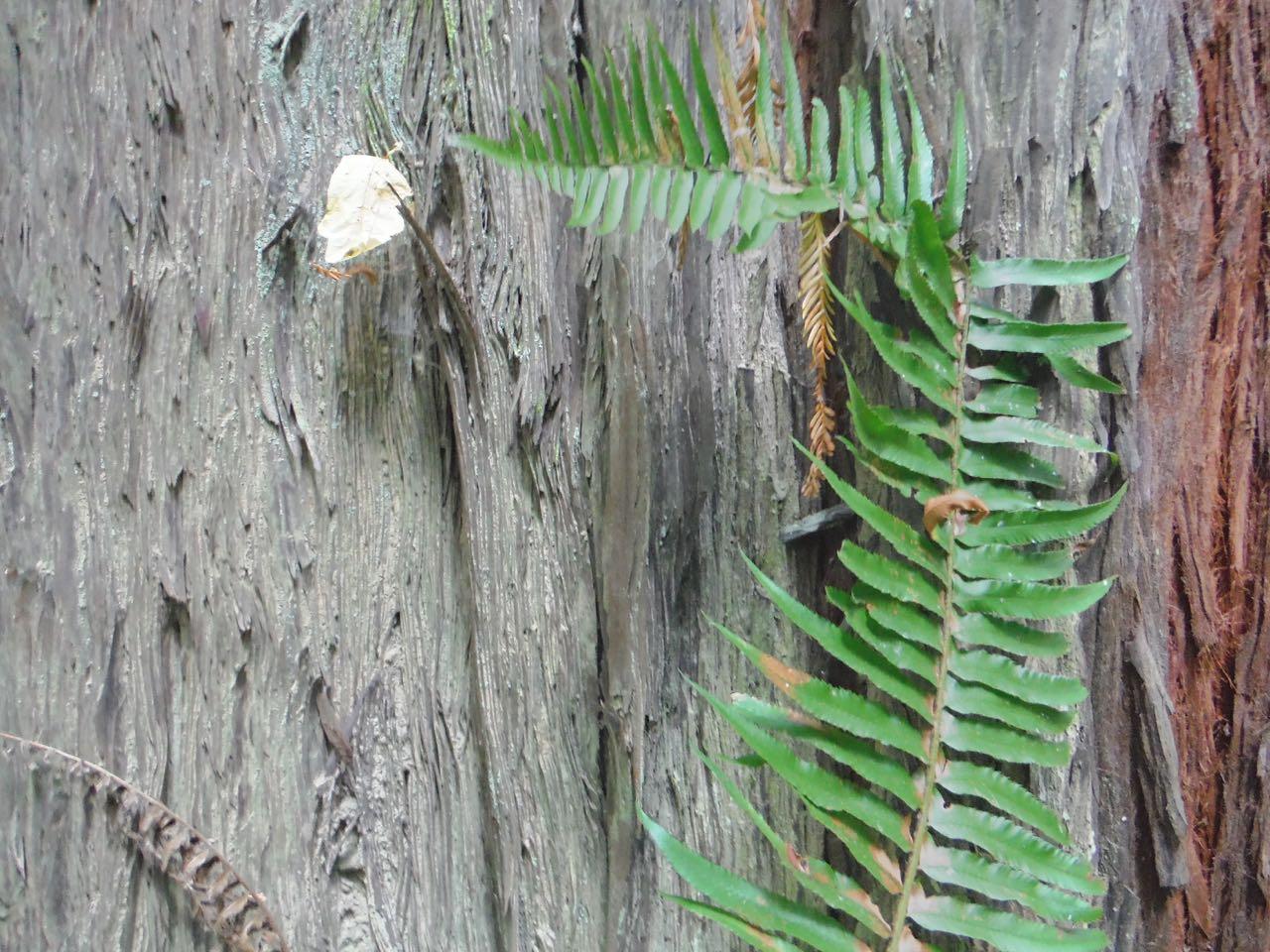 Redwoods 2017 10 01 48 Of 244