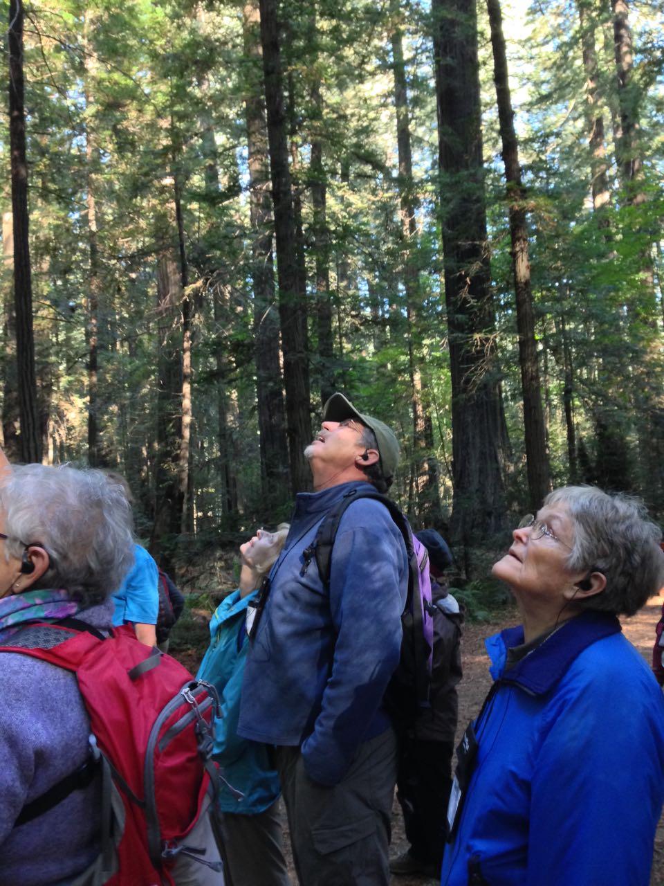 Redwoods 2017 10 01 5 Of 244