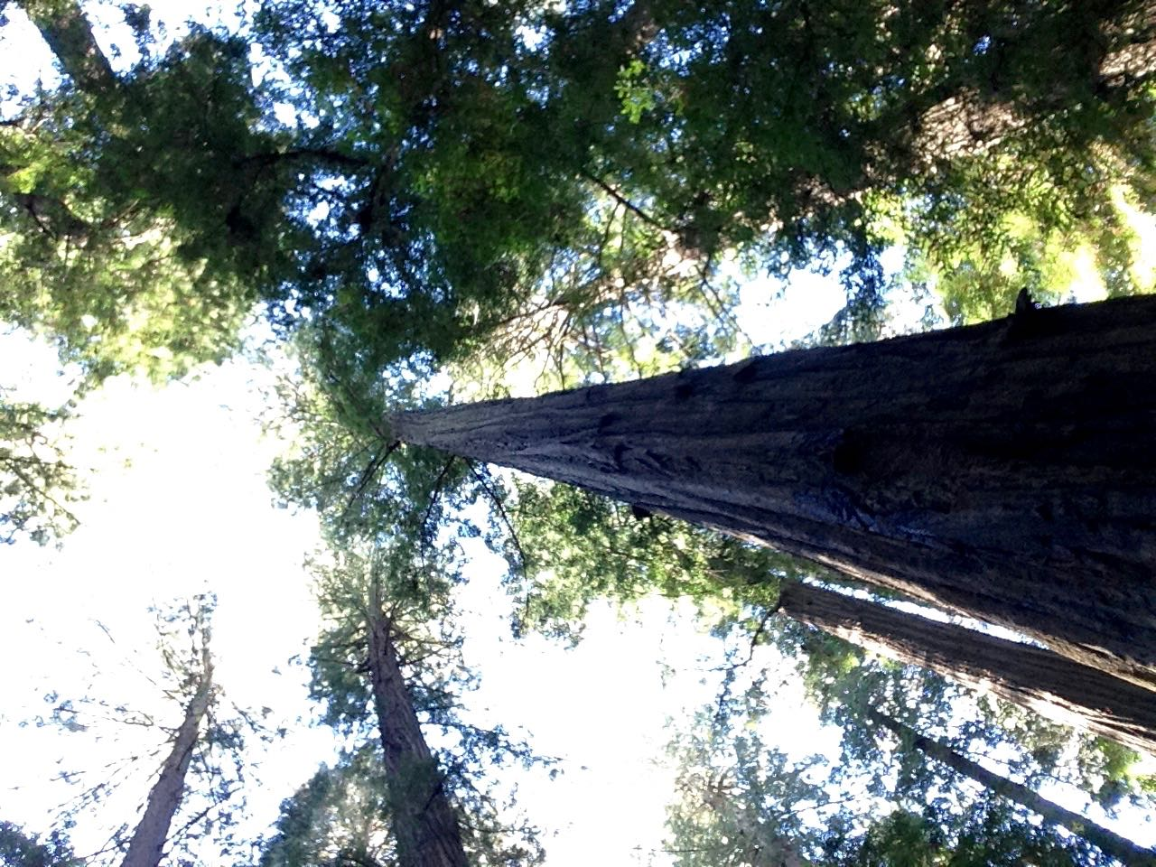 Redwoods 2017 10 01 6 Of 244