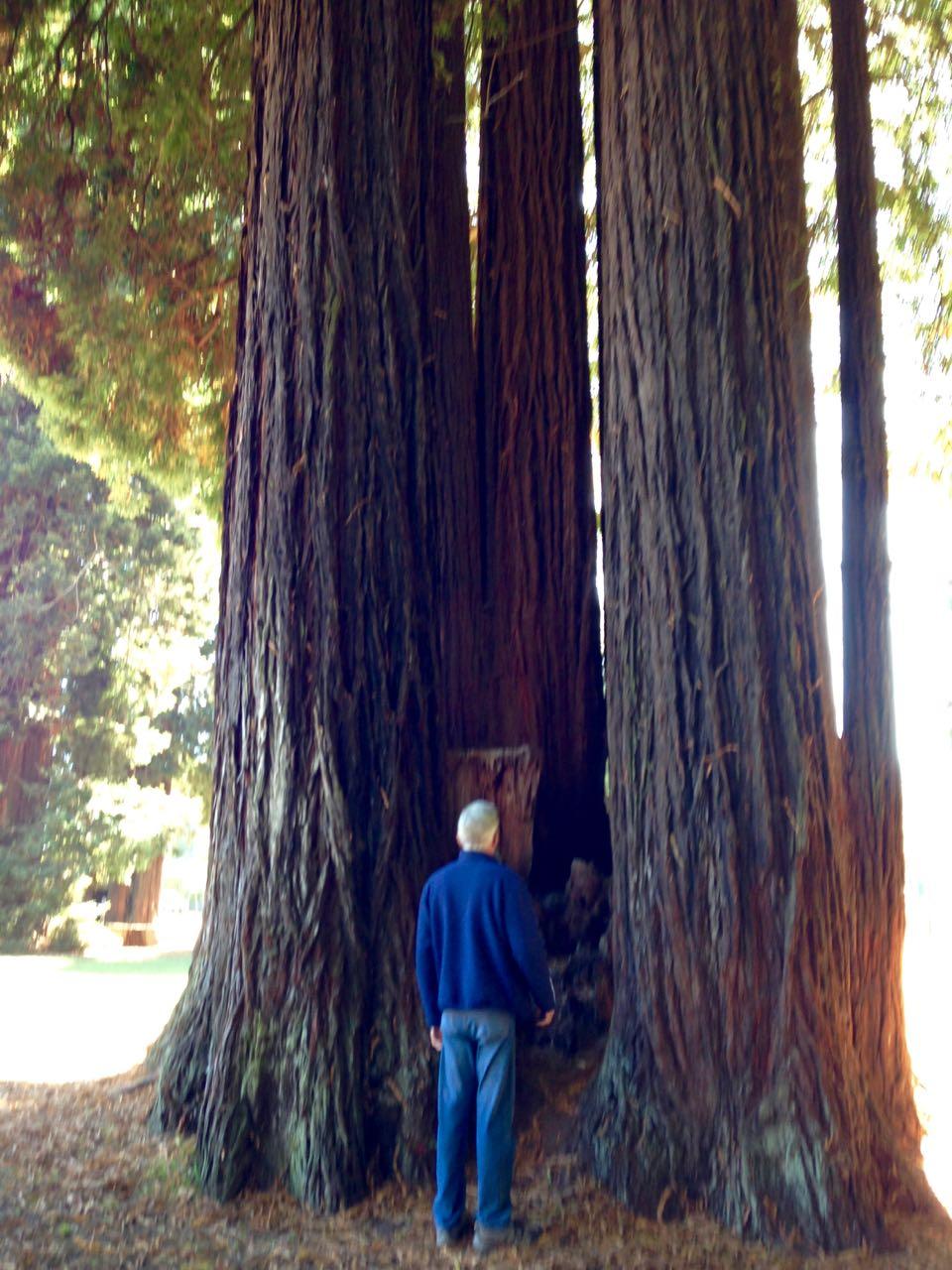 Redwoods 2017 10 01 79 Of 244