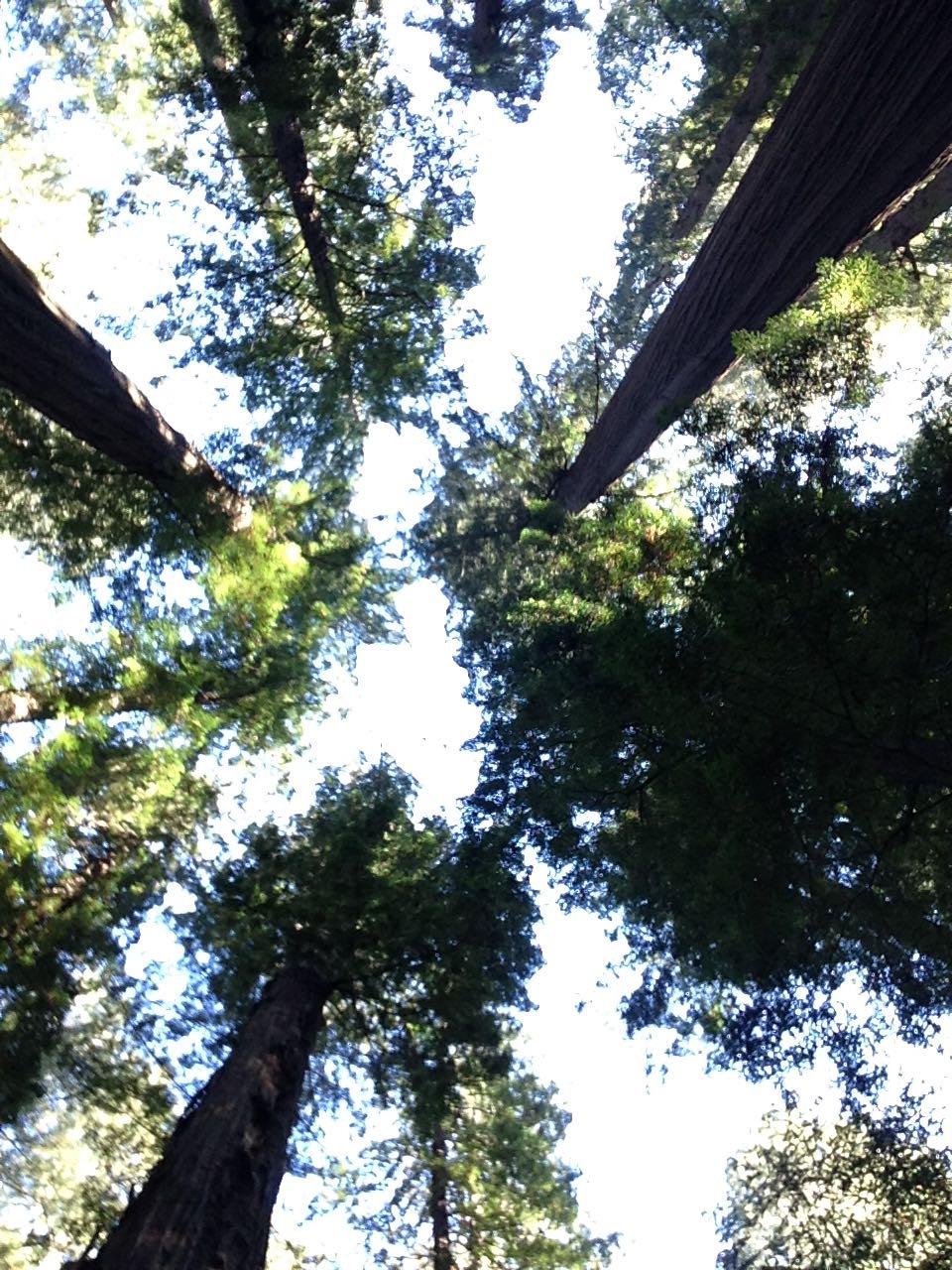 Redwoods 2017 10 01 8 Of 244
